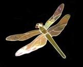 Dragonfly SH269
